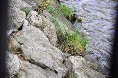 La vida en las piedras